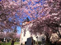 Ostern 2021 in St. Vitus Sailauf (16)