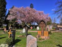 Ostern 2021 in St. Vitus Sailauf (13)