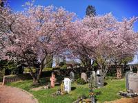 Ostern 2021 in St. Vitus Sailauf (11)